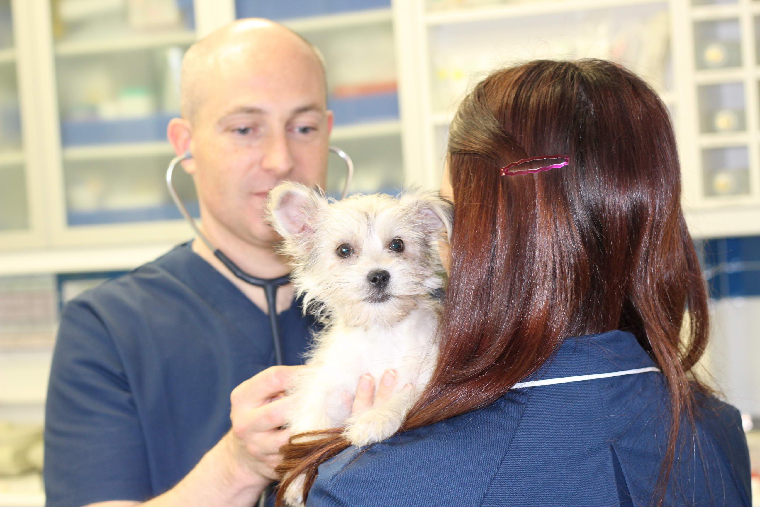 Medicina de pequeños animales y exóticos