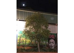 Frida Kahlo, la seua mirada vegetal al Mercat Municipal de Picanya