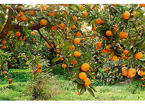 Formación en Agricultura (IVIA)
